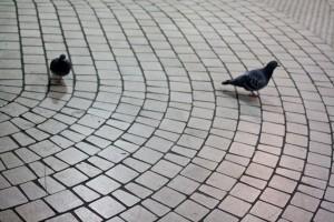 Shinjuku pigeons